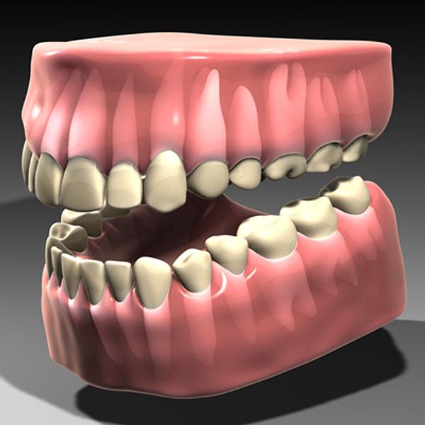 Dentición adulta al completo